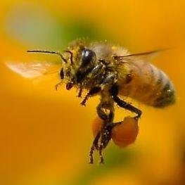 蜂の夢の夢占い