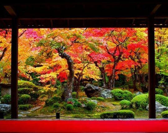 美しい紅葉を見る夢