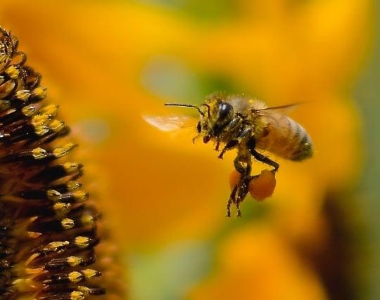 蜜蜂が忙しそうに働いている夢