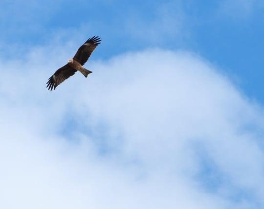 空を自由に力強く羽ばたく鳥の夢