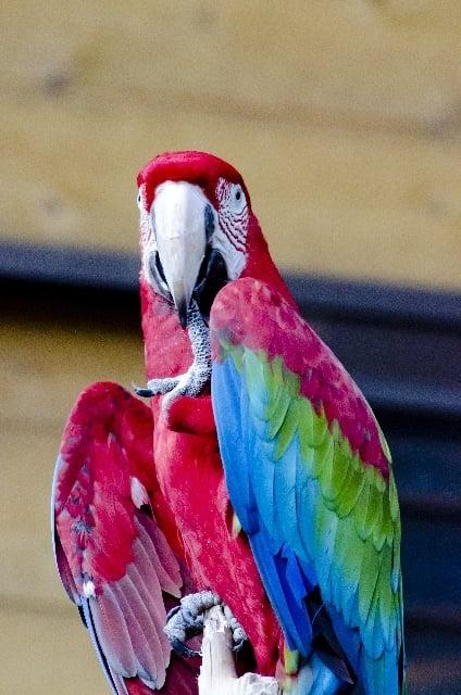 カラフルな鳥が現れる夢