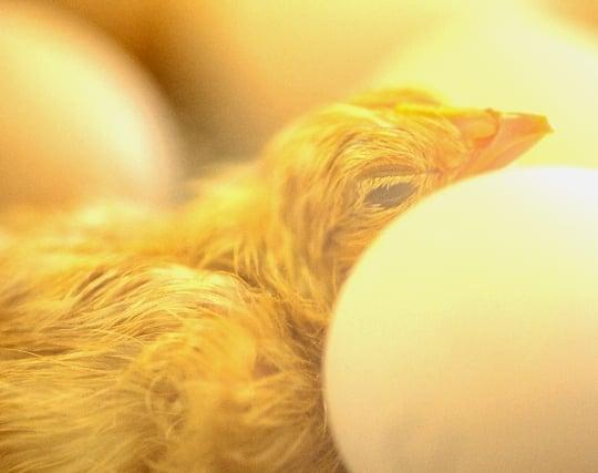 鳥の卵が<strong>孵化</strong>する夢