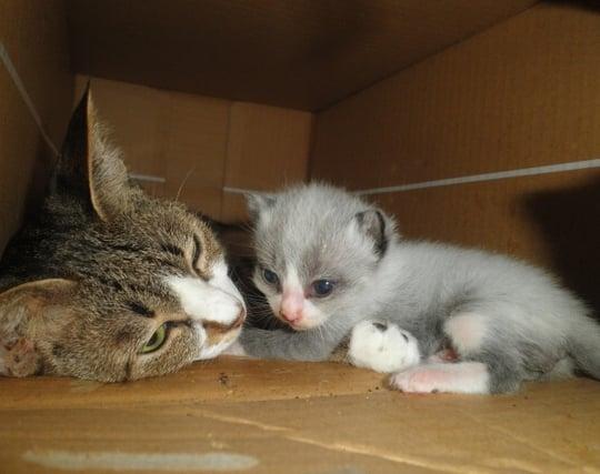 かわいい子<strong>猫を出産</strong>する夢