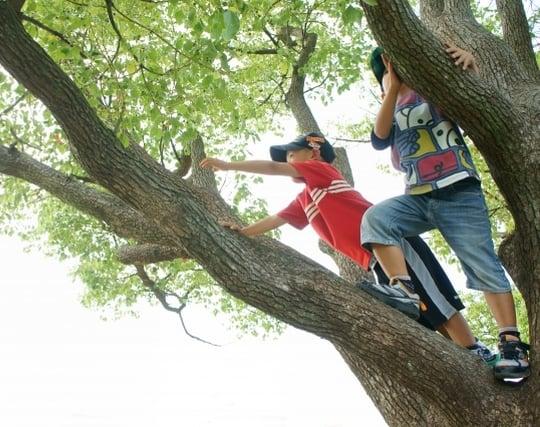 木に登る夢