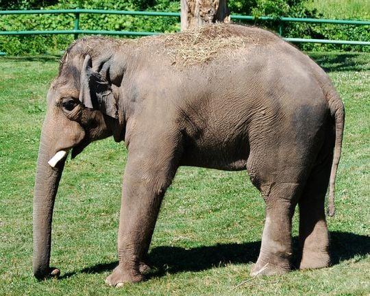 象が現れる夢