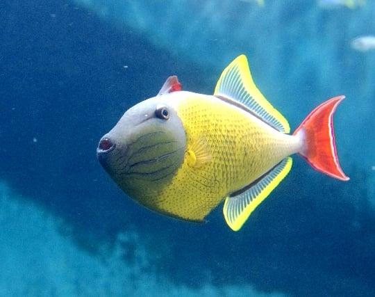 派手な熱帯魚が現れる夢