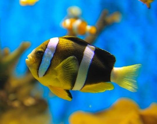 カラフルな熱帯魚が現れる夢