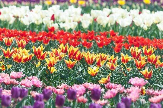 綺麗な花が咲いている夢