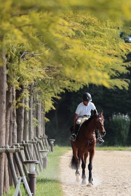 立派な馬に乗る夢