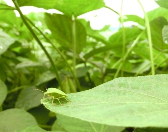 保護色の昆虫の夢