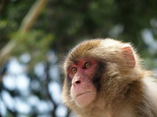 猿の画像 p1_32