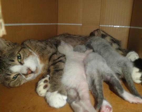 ペットが<strong>出産</strong>する夢