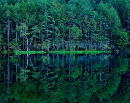 水面が穏やかな池の夢