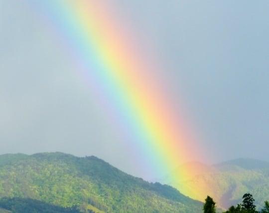 雨上がりの<strong>虹</strong>の夢