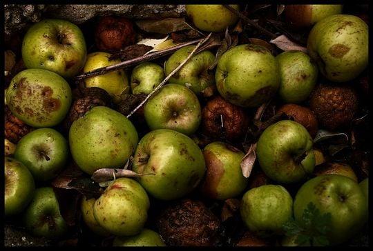 腐ったリンゴの夢