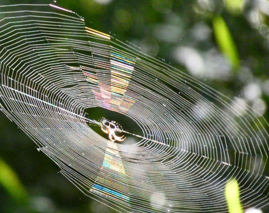 蜘蛛の巣の夢