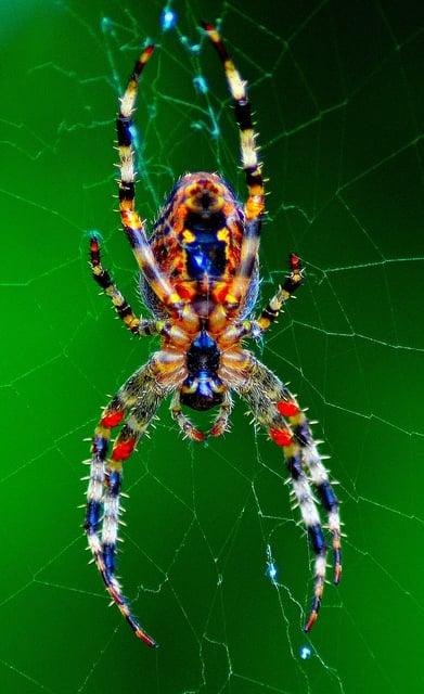 カラフルな蜘蛛が現れる夢