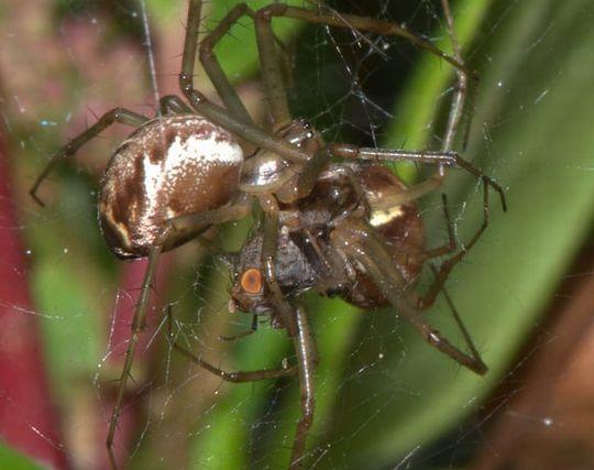 蜘蛛と<strong>戦う</strong>夢