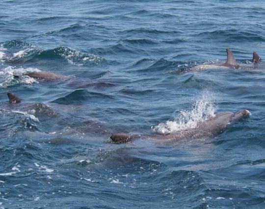 <strong>複数</strong>のイルカが泳いでいる夢