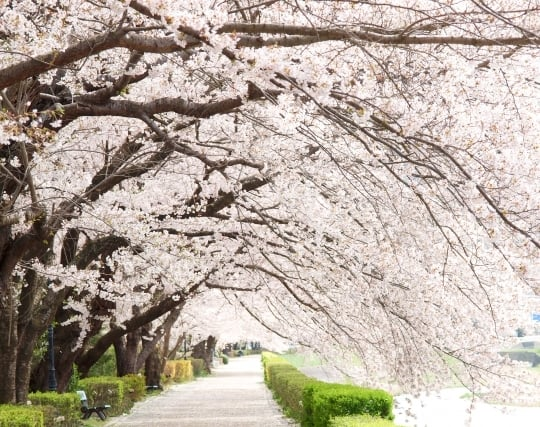 木に花が咲く夢