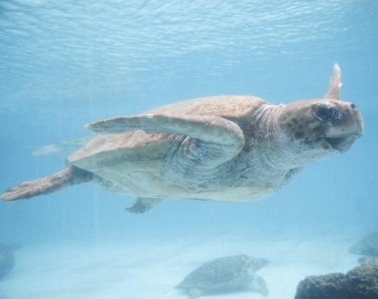 海亀が泳ぐ夢
