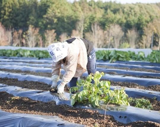 畑で野菜を収穫する夢