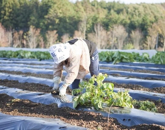 <strong>畑</strong>で野菜を収穫する夢