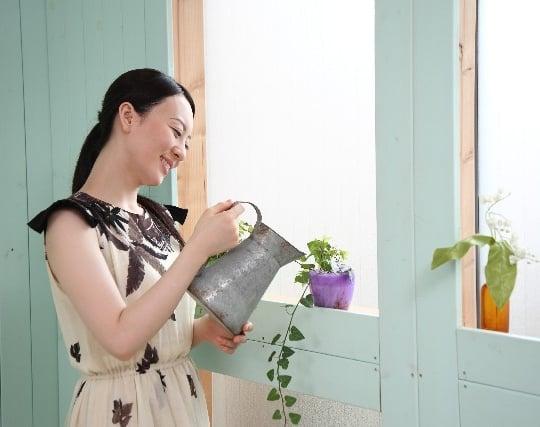 植木に水をやる夢