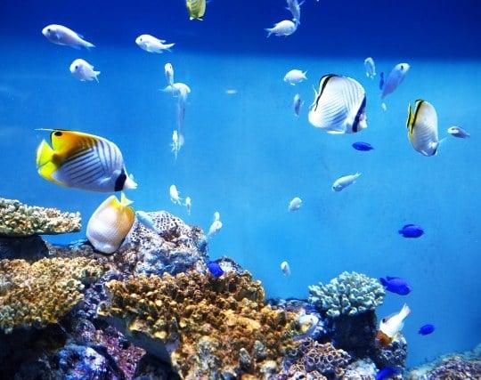 澄んだ水が印象的な水槽の夢