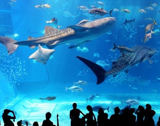 水族館にいる夢