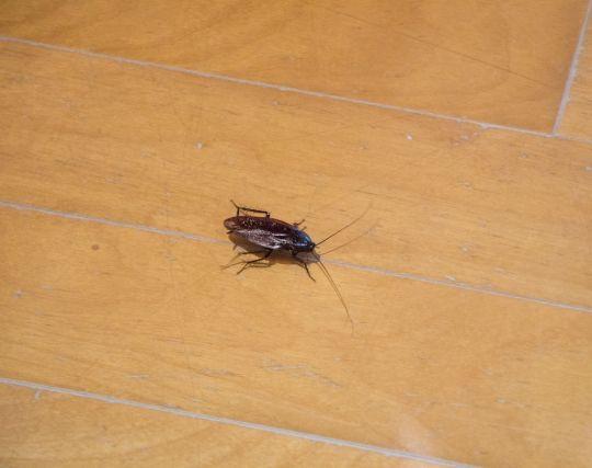 自分がゴキブリになる夢
