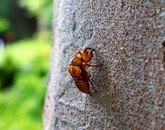 ゴキブリが蝉に変身する夢