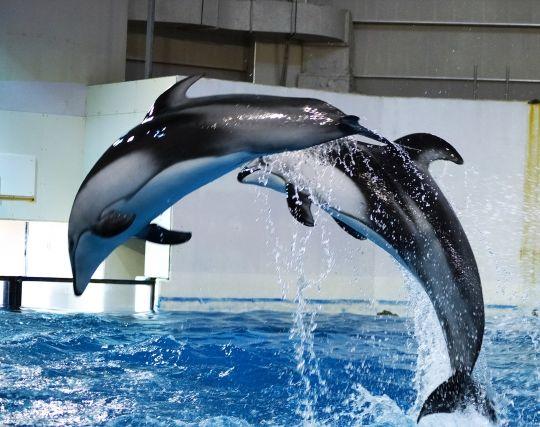 イルカがジャンプする夢