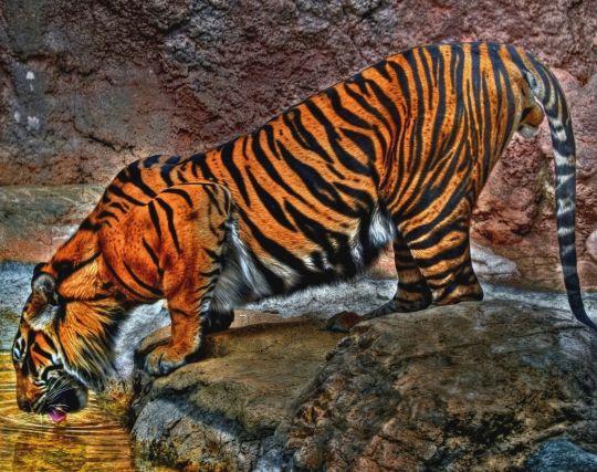虎に食べられる夢