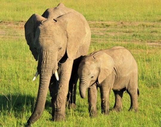 親子の象を見る夢