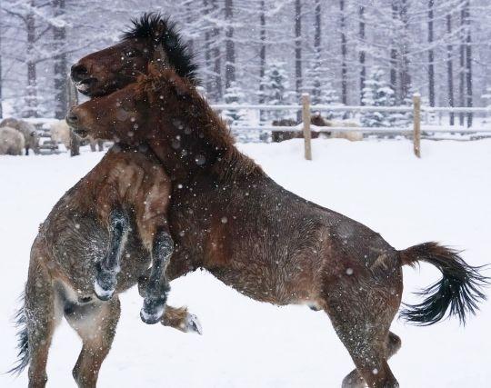 馬と戦う夢