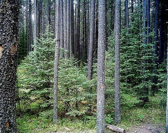 整備された美しい森の夢