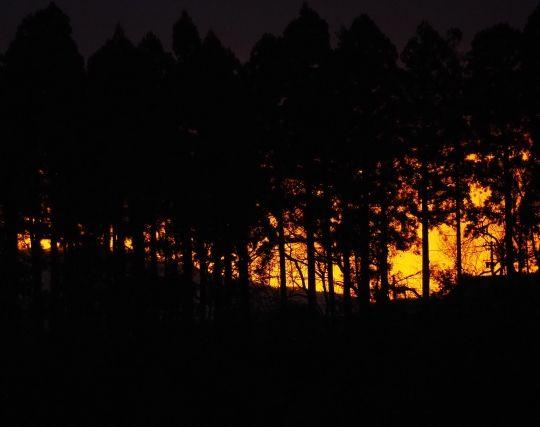 森林火災が印象的な夢