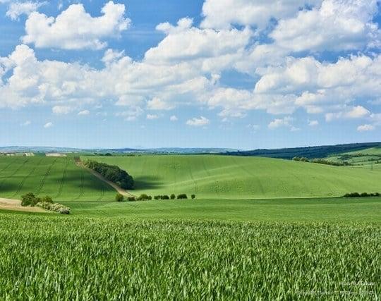 青々とした草原の夢