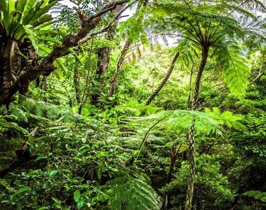 ジャングルを探検する夢