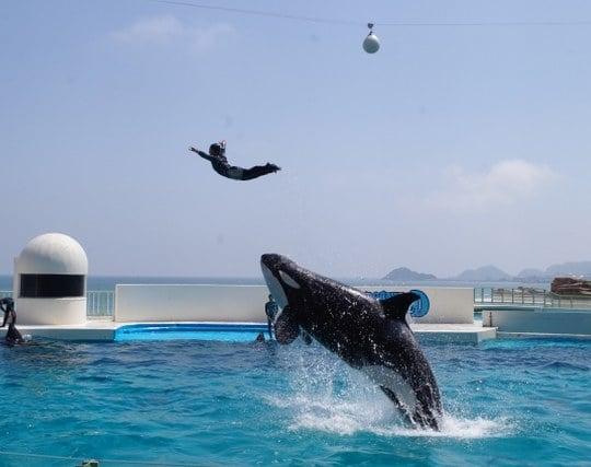 シャチのショーで自分がジャンプする夢