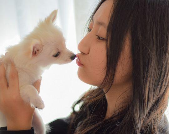 <strong>犬</strong>にキスされる夢
