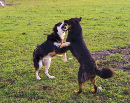 動物同士が喧嘩する夢
