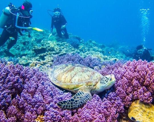 スキューバダイビングで綺麗な珊瑚礁と亀を見る夢