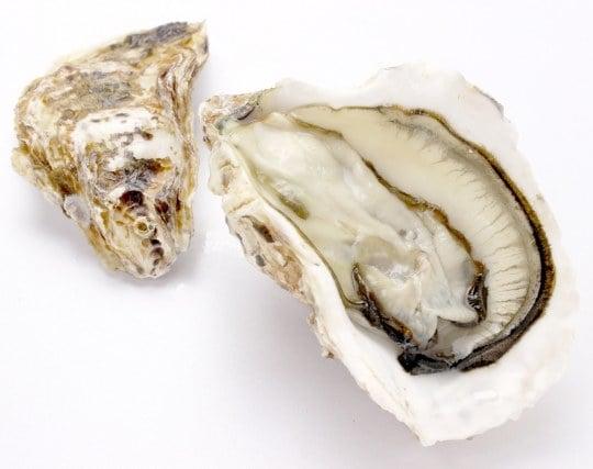 開いている貝の夢