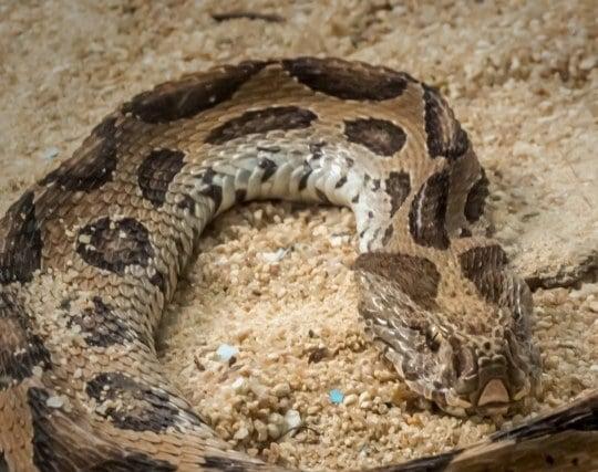 蛇が現れる夢