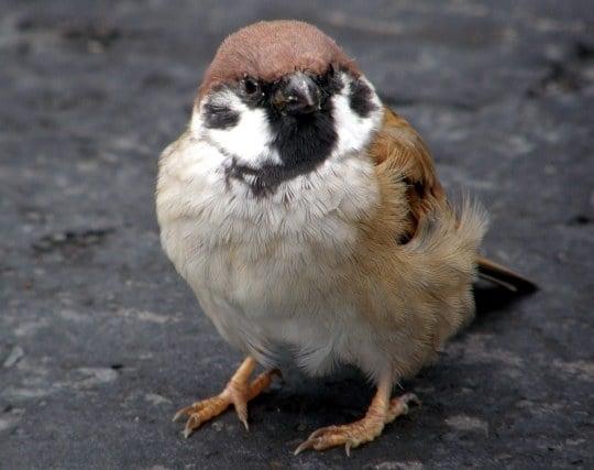 可愛い雀の夢