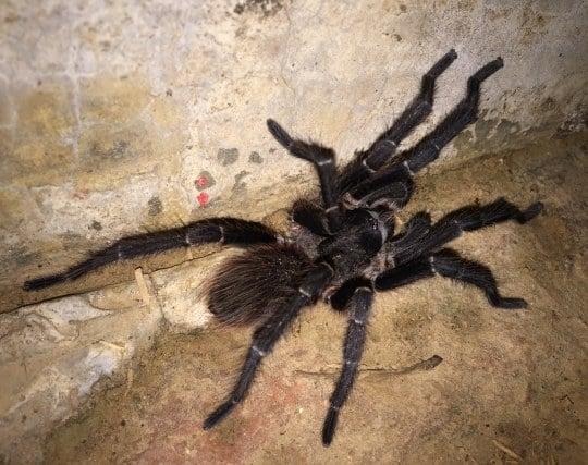 毒蜘蛛が現れる夢