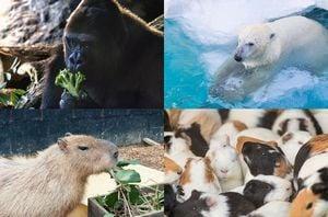 たくさんの動物が<strong>出てくる</strong>夢