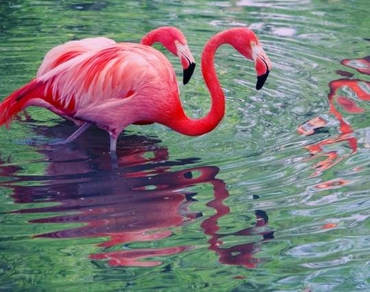 美しい鳥が現れる夢